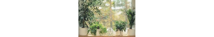 Blumat Classic - indoor plants watering