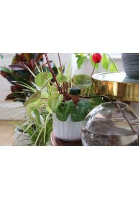 Dozownik Blumat Classic dla roślin, pojedynczy stożek