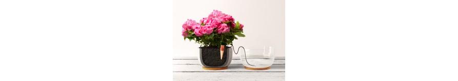 Blumat dla roślin domowych